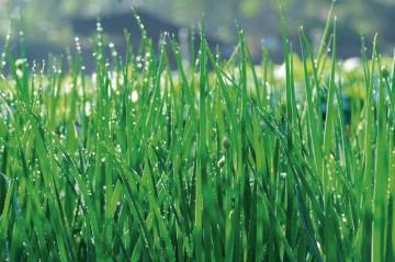 Фотообои роса на траве 5